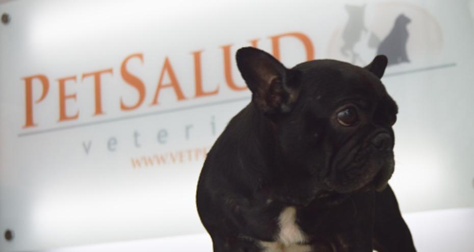 Clínicas veterinaria en Lima Pet Salud